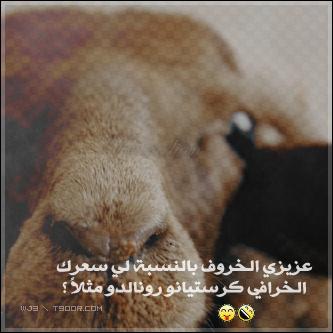 خلفيات خروف العيد 2013 رمزيات لعيد الأضحي 2013 111028132151H6OD.png