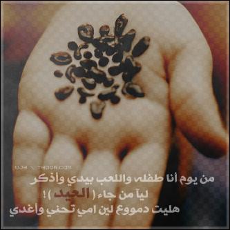 خلفيات خروف العيد 2013 رمزيات لعيد الأضحي 2013 1110281322016Yhz.png