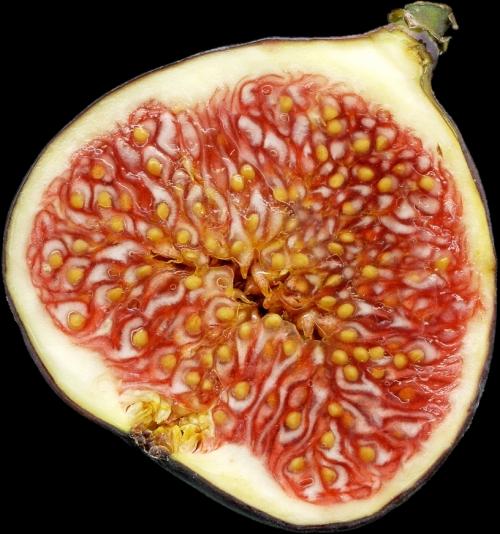 الفاكهة 1110291613592dA8.jpg