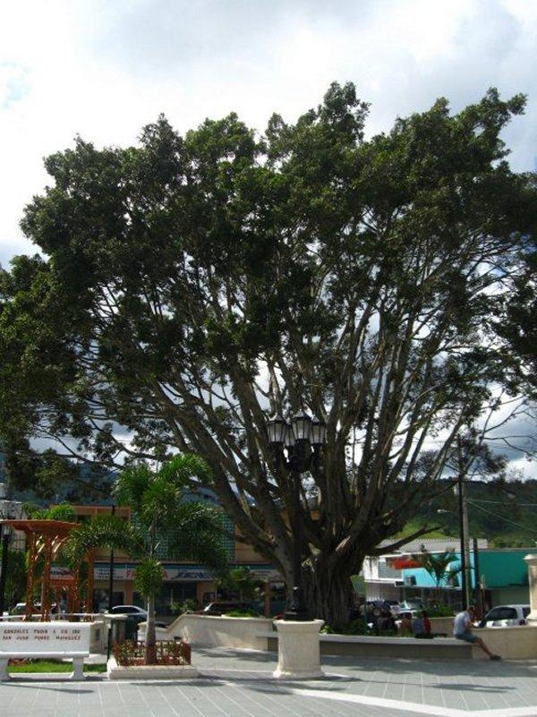 الاستمتاع بورتوريكو 111104111257ri4b.jpg