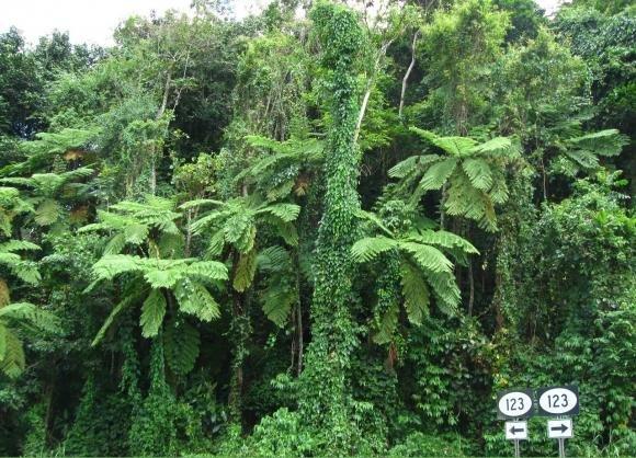 الاستمتاع بورتوريكو 1111041113020vFt.jpg