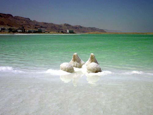العربية الطبيعية 111114093351MxY1.jpg