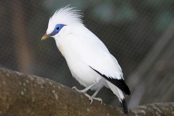 أجمل وأغرب انواع الطيور العالم 111129135456vLey.jpg