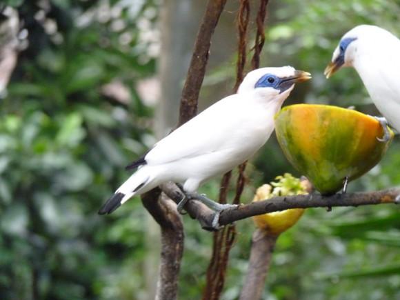 أجمل وأغرب انواع الطيور العالم
