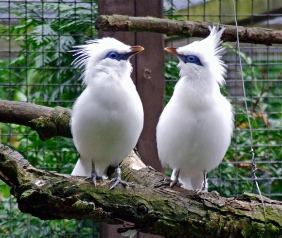 أجمل وأغرب انواع الطيور العالم 111129135457TtG1.jpg