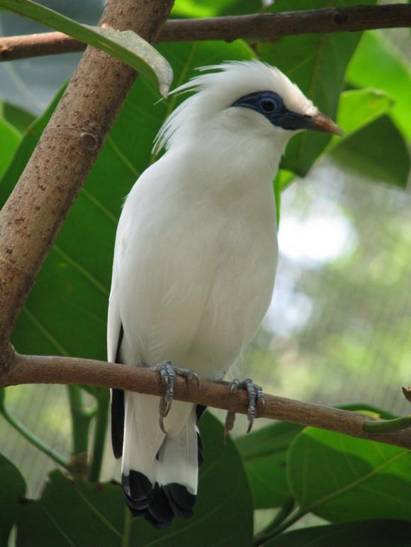 أجمل وأغرب انواع الطيور العالم 111129135458JsUB.jpg
