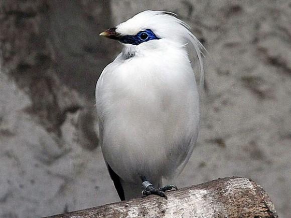 أجمل وأغرب انواع الطيور العالم 111129135458qWZf.jpg