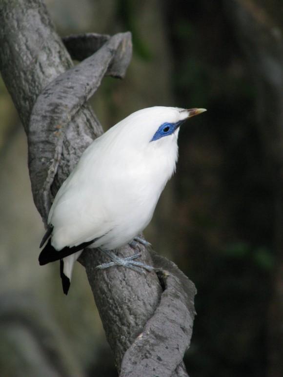 أجمل وأغرب انواع الطيور العالم 111129135459qht6.jpg