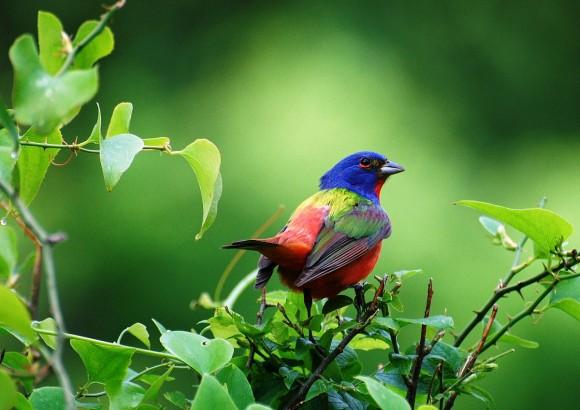 أجمل وأغرب انواع الطيور العالم 111129135500yPlw.jpg