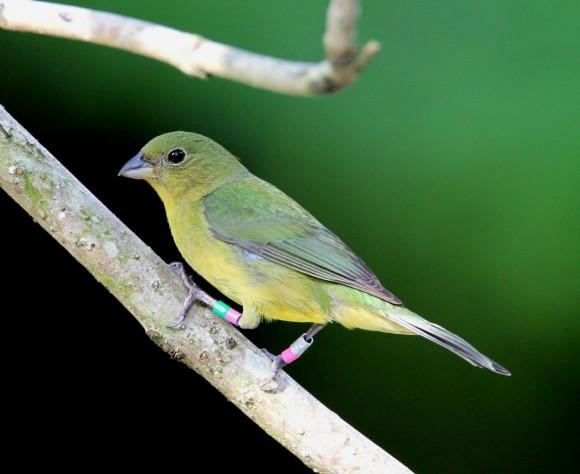 أجمل وأغرب انواع الطيور العالم 1111291355015gDA.jpg