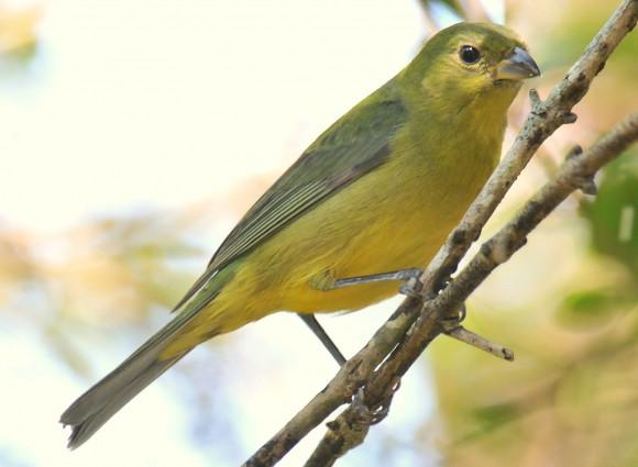 أجمل وأغرب انواع الطيور العالم 111129135501CKVX.jpg