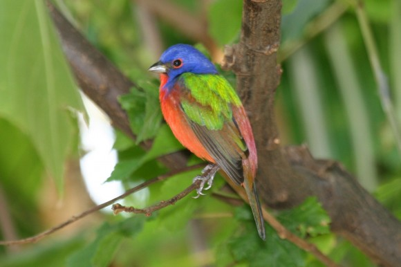أجمل وأغرب انواع الطيور العالم 111129135502GBVX.jpg