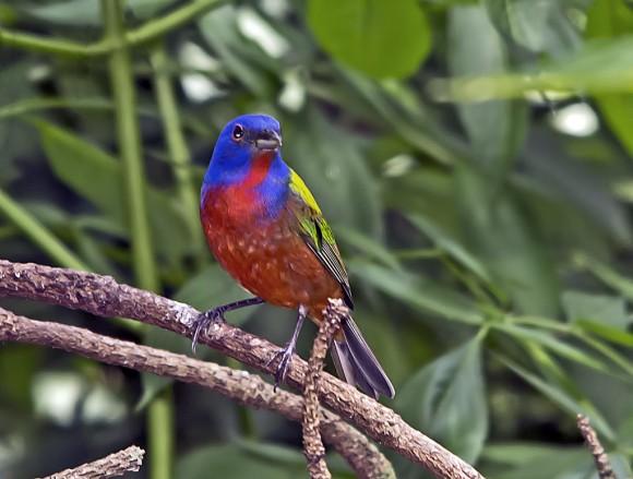 أجمل وأغرب انواع الطيور العالم 1111291355033xT3.jpg
