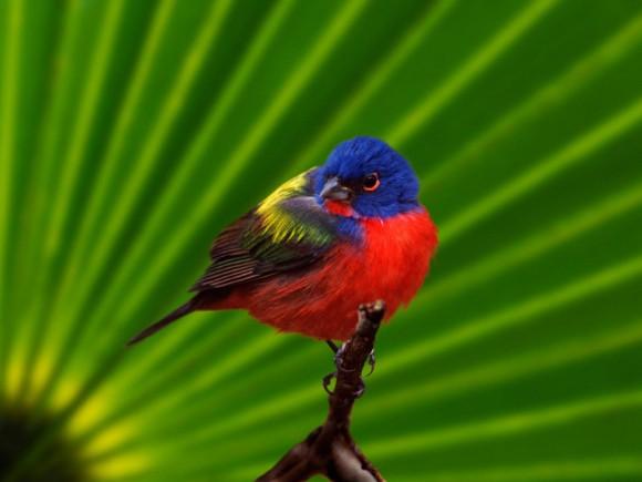 أجمل وأغرب انواع الطيور العالم 111129135503DURC.jpg