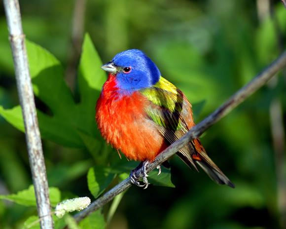 أجمل وأغرب انواع الطيور العالم 111129135504DgyT.jpg