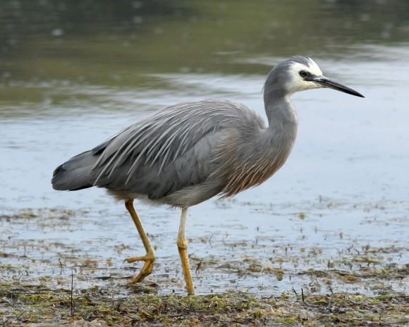 أجمل وأغرب انواع الطيور العالم 111129135505doAB.jpg