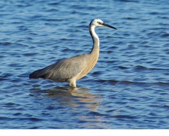 أجمل وأغرب انواع الطيور العالم 1111291355062ek1.jpg