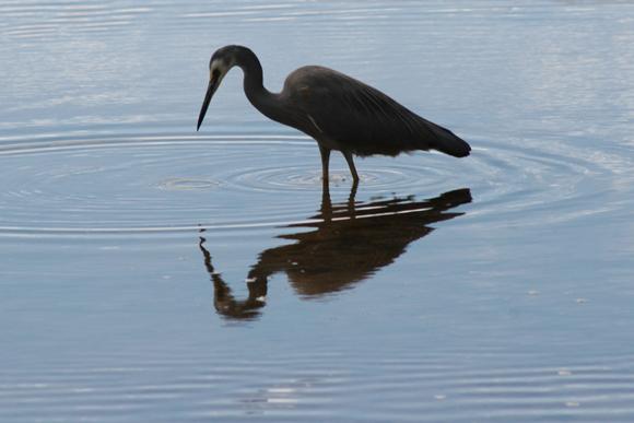 أجمل وأغرب انواع الطيور العالم 111129135507Eb9R.jpg