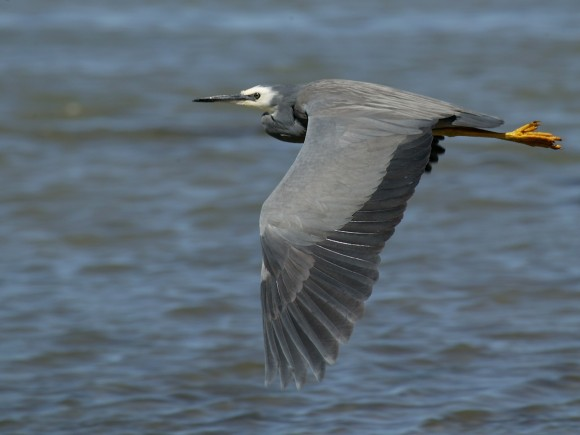 أجمل وأغرب انواع الطيور العالم 111129135508iq2K.jpg