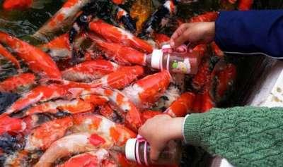 أسماك ترضع رضاعات الاطفال صور 1112171759007Xlw.jpg