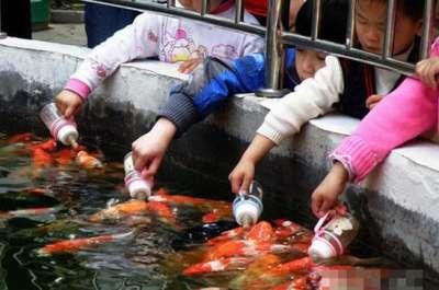 أسماك ترضع رضاعات الاطفال صور 111217175900YcMy.jpg