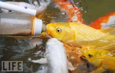 أسماك ترضع رضاعات الاطفال صور 111217175900igrj.jpg