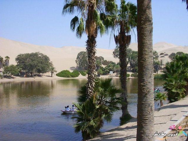 الخضراء الصحراء 120312143531SJWM.jpg