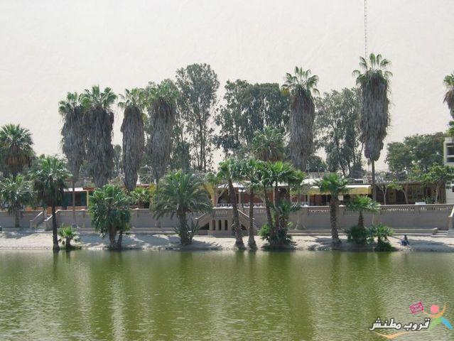 الخضراء الصحراء 120312143531StRE.jpg