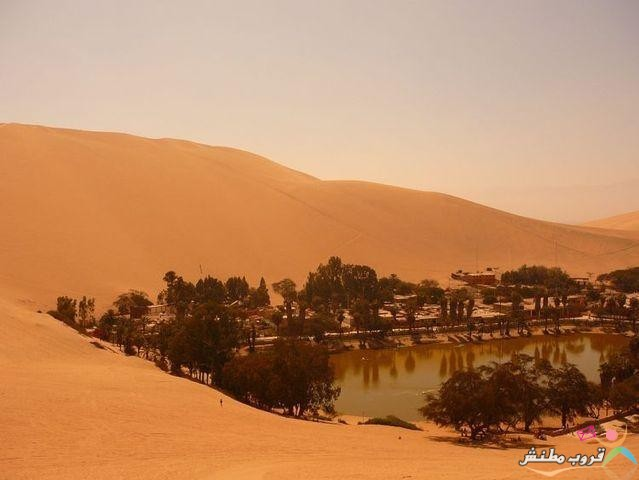 الخضراء الصحراء 120312143532Dz9x.jpg