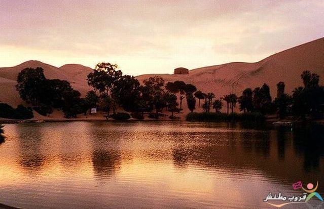 الخضراء الصحراء 1203121435343xUF.jpg