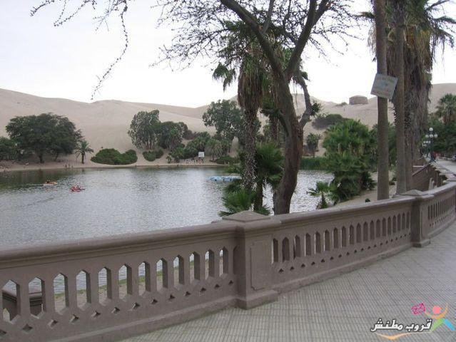 الخضراء الصحراء 12031214353488mw.jpg