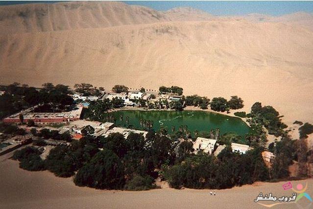 الخضراء الصحراء 120312143534s0MD.jpg