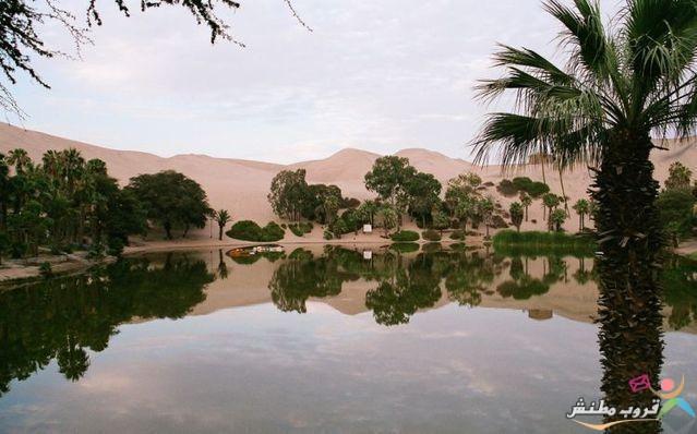 الخضراء الصحراء 120312143536vbUc.jpg