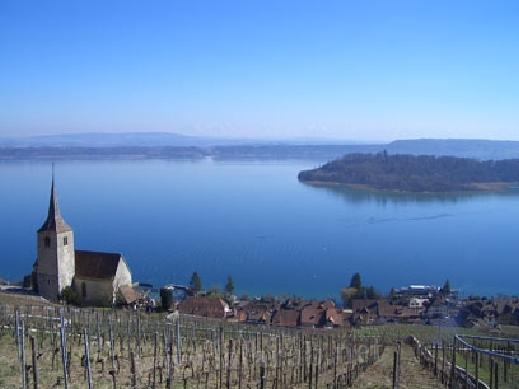 السويسرية 1203211500329Ao6.jpg