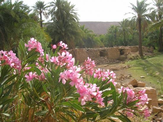 2013 الجزائريه 2013 120404143448Hjbl.jpg