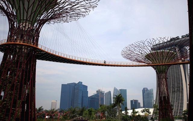 الأشجار سنغافورة 120503175115oY19.jpg
