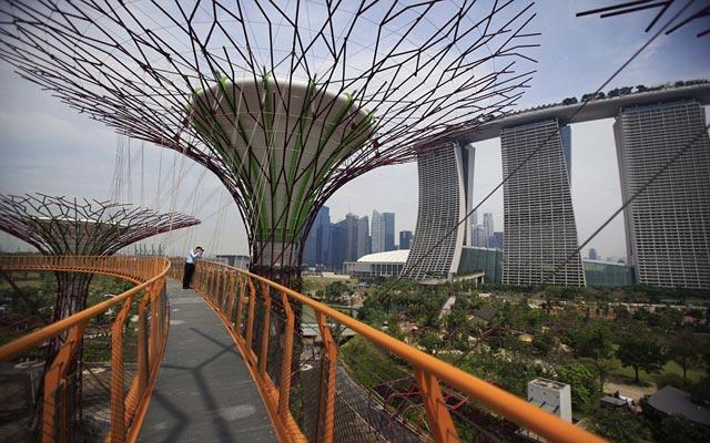 الأشجار سنغافورة 120503175115slU5.jpg