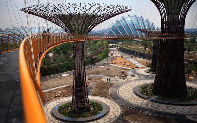 الأشجار سنغافورة 1205031751165h6p.jpg