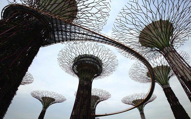 الأشجار سنغافورة 120503175116Yipr.jpg