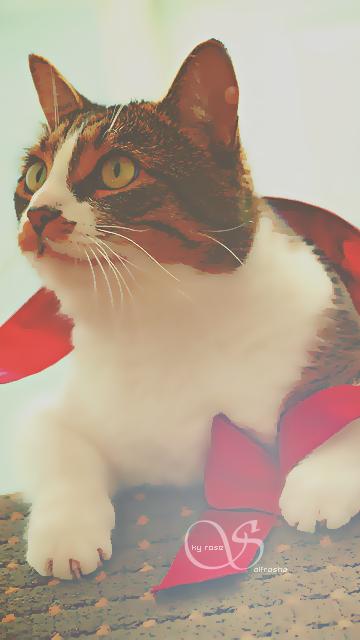 رمزيات جالكسي قطط جميلة جدا 120817094230HNEB.png