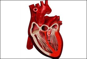 القلب2013,التهاب القلب2013 120830085222UzXW.jpg