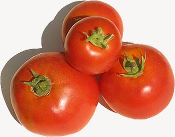 الطماطم 2013 2013 120901230822Z2Ir.jpg