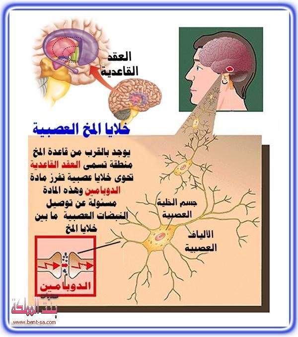 والعلاج2013 العصبي2013 120905164648g98o.jpg
