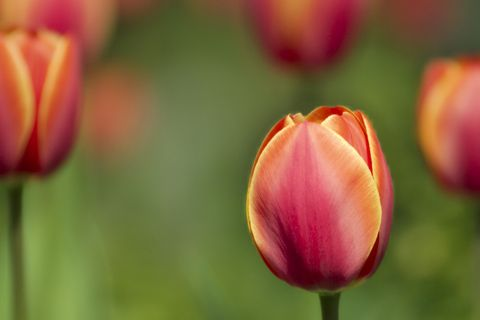 اشيك خلفيات بلاك بيري ورد 2013 ، صور ورد للبلاك بيري 2014، اجدد خلفيات زهور للبلاك2014 120910045211yQOE.jpg