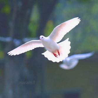 يآ طيور الشوق خذيني له تكفين ..  رمزيات 120916234838IvCg.jpg