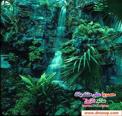 الامازون 2013 الامازون 2013 السياحه 120920172419wa2j.jpg