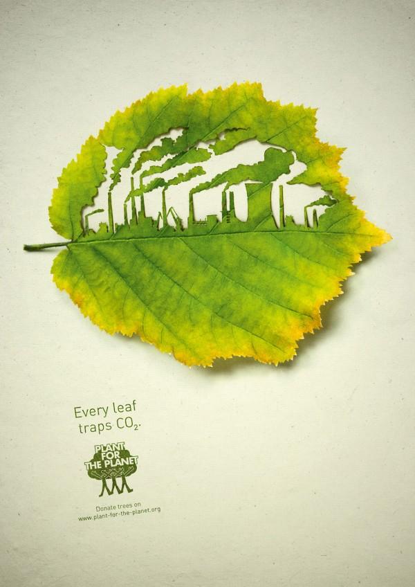 صور التلوث البيئي على ورقة شجر حلوة 2013 121002124110K9P5.jpg