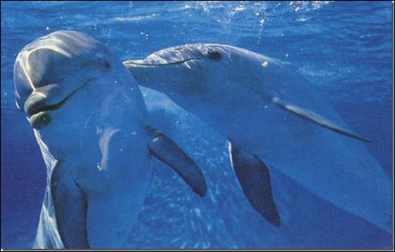 صور أجمل عشر حيوانات 2013 121025125251GKqs.jpg