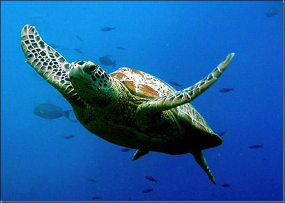 صور أجمل عشر حيوانات 2013 1210251252546919.jpg