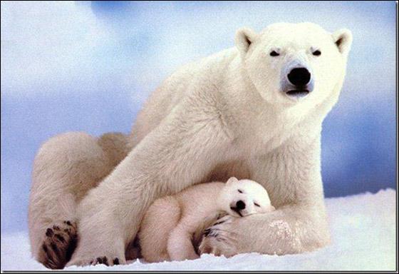 صور أجمل عشر حيوانات 2013 121025125255Ni4r.jpg